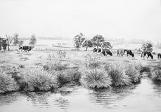 Коровы в иллюстрации луга Стоковая Фотография