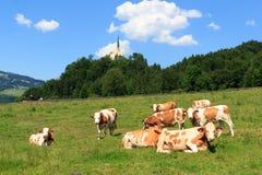 Коровы в alps Стоковые Изображения RF