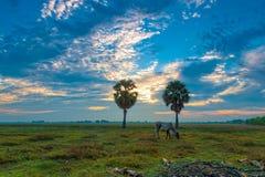 Коровы есть на ландшафте Anlung защищенном Pring Стоковые Фото
