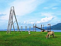 Коровы едят трав-реку - гористый фон Стоковая Фотография