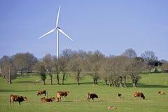 Коровы и ветротурбина в луге Стоковые Фото