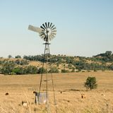 Коровы и ветрянка в сельской местности Стоковое Изображение