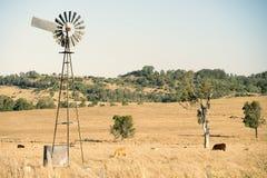 Коровы и ветрянка в сельской местности Стоковые Фотографии RF