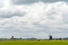 Коровы и ветрянка на поле Стоковая Фотография RF