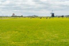 Коровы и ветрянка на поле Стоковые Изображения