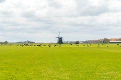 Коровы и ветрянка на поле Стоковое фото RF