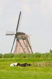 Коровы и ветрянка Стоковое фото RF