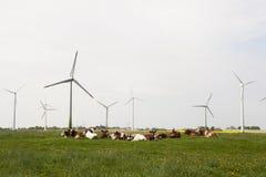 Коровы и ветрянки Стоковое Фото