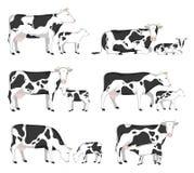 Коровы и икры вектора бесплатная иллюстрация