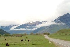 Коровы и лошади на зеленом поле Стоковая Фотография