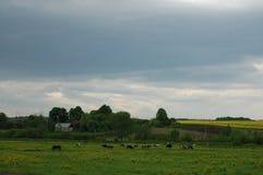 Коровы и лошади пасут на зеленом луге Стоковое Фото