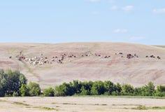 Коровы и лошади пася на горном склоне Стоковое Изображение RF