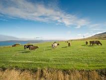 Коровы на зеленом выгоне и голубом небе Стоковые Изображения
