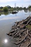 Коровы на моча чонсервной банке в сельском покинутом пруде Стоковое Изображение