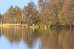 Коровы на озере Стоковые Изображения