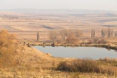 Коровы на озере Стоковое Изображение RF