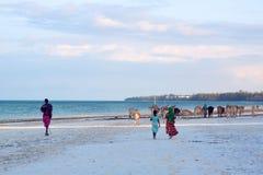 Коровы на пляже Занзибара Стоковое Изображение