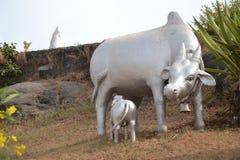 Коровы на статуе Shiva - Murudeshwar Стоковые Фотографии RF