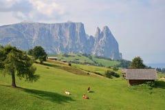 Коровы на луге на Seiser Alm, Италии Стоковые Изображения RF