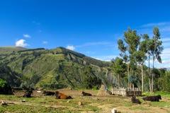 Коровы на ферме в горах Стоковые Фотографии RF