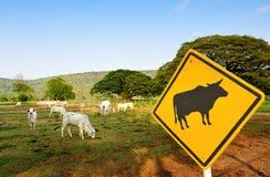 Коровы на ферме Стоковая Фотография RF