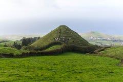 Коровы на холме, Азорские островы Стоковые Изображения RF