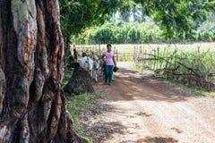 Коровы пастушкы девушки Узкая часть на сторонах баров Стоковые Фото