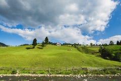 2 коровы пасут около дома на холме Стоковая Фотография RF