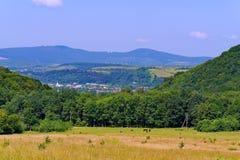 Коровы пася в луге около высокорослых зеленых деревьев против фона малого горного села Стоковая Фотография