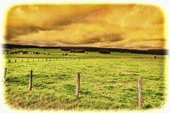 Коровы пася на зеленом выгоне в Бельгии Стоковые Фото