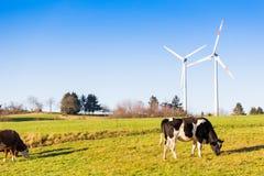 Коровы пася на луге и ветротурбинах в lan предпосылки сельском Стоковые Изображения