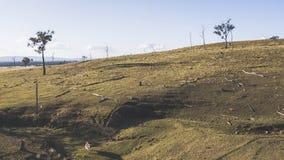 Коровы страны на ферме Стоковое Изображение