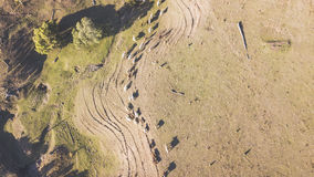 Коровы страны на ферме Стоковая Фотография