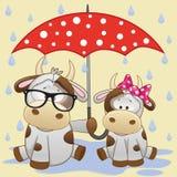2 коровы с зонтиком иллюстрация вектора