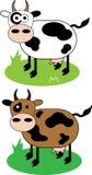 Коровы Стоковое Изображение RF