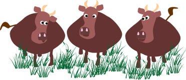 коровы иллюстрация вектора
