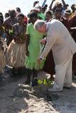 Королевская мангрова Стоковая Фотография RF