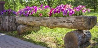 Королевские цветки пеларгонии - grandiflorum пеларгонии Стоковое Фото