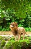 королевство большого кота Стоковые Фото