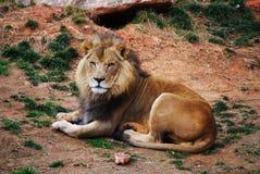 король джунглей Стоковое Изображение RF