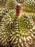 Король дуриана плодоовощей с стержнем Стоковая Фотография