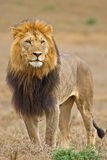 король Стоковая Фотография RF