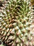 Король Durian плодоовощей Стоковые Изображения