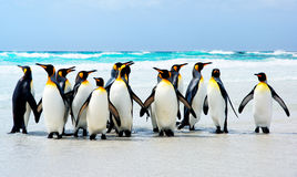 короля пляжа стоковое фото