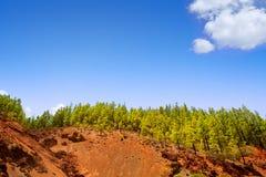 Корона Forestal в национальном парке Teide на Тенерифе стоковое фото rf