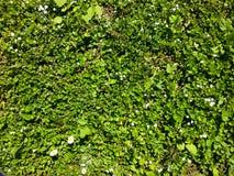 Короткая лужайка Стоковая Фотография