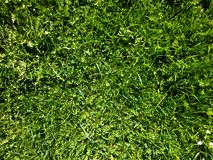 Короткая лужайка Стоковые Фото