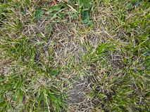 Короткая лужайка Стоковое Изображение