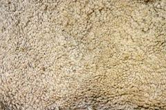 Короткое плотное бежевое мех Стоковая Фотография