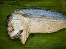 Коротк-уплотненная скумбрия (brachysoma Rastrelliger) Стоковое Изображение